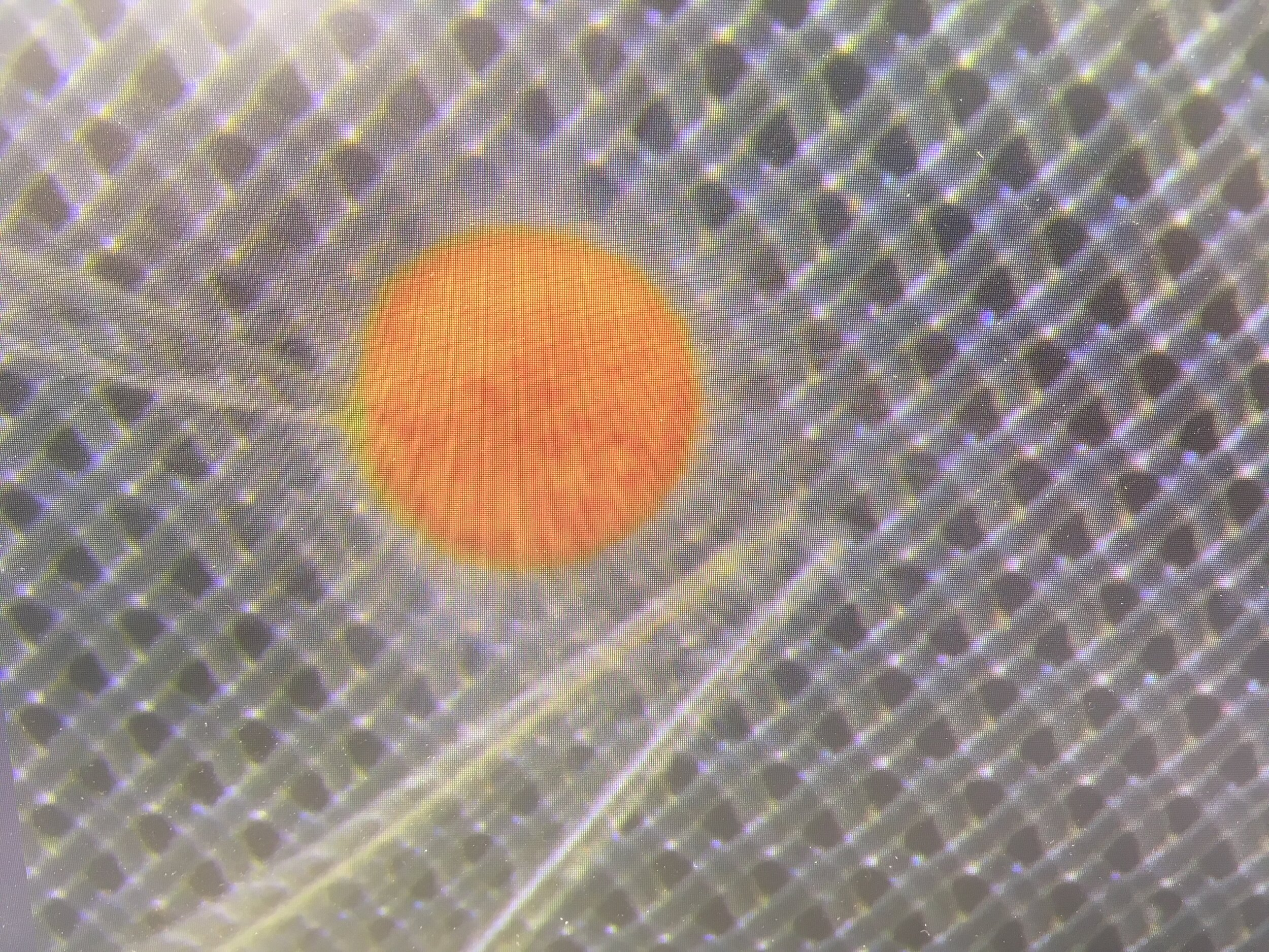 Orbulina Universa being probed with microelectrodes
