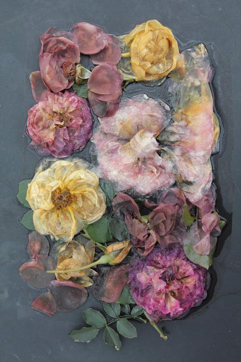 Mary Kocol, Rose Plate Variety.  Image Courtesy of  Gallery Naga