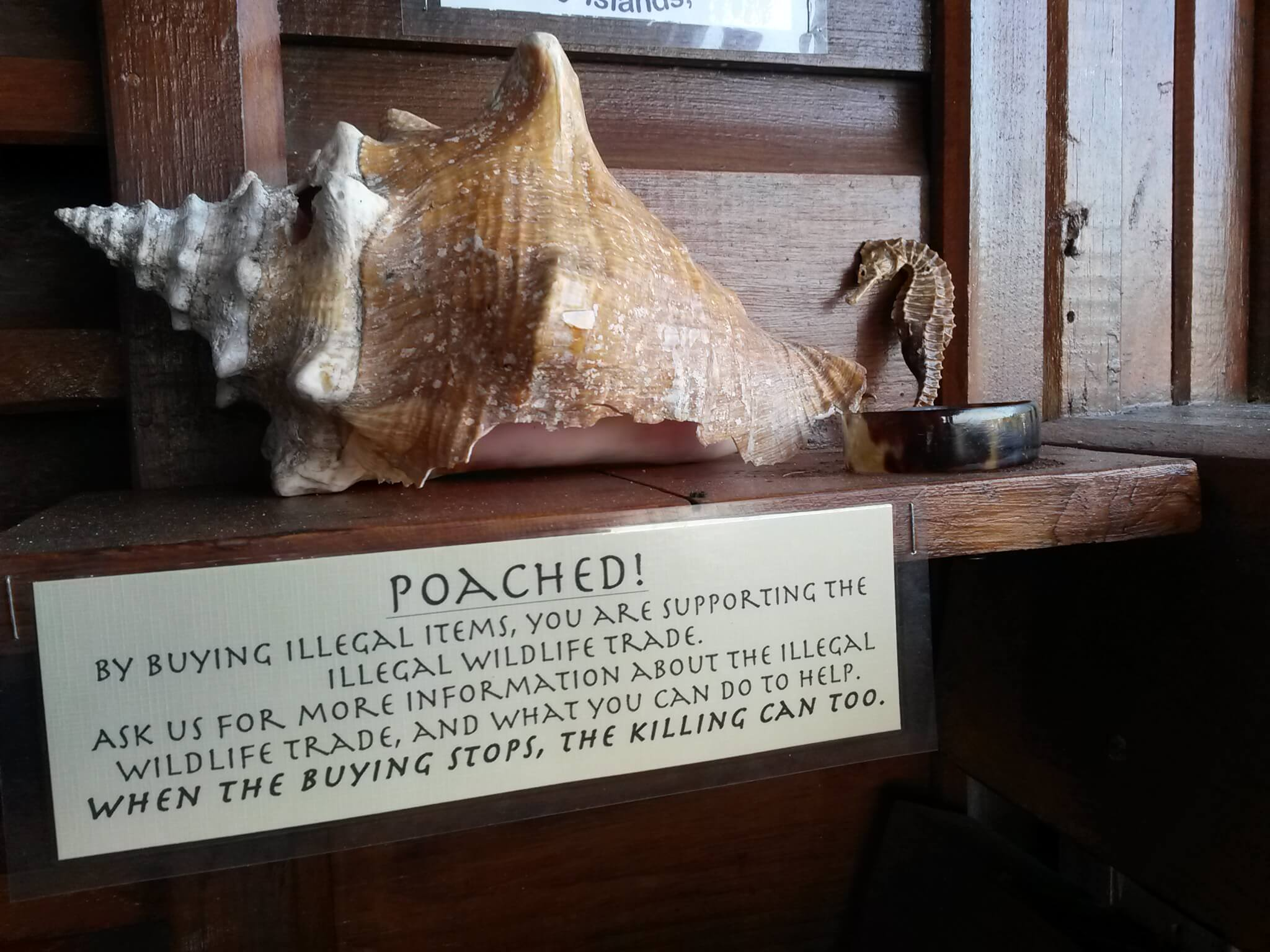 Poached Items Roatan Divers