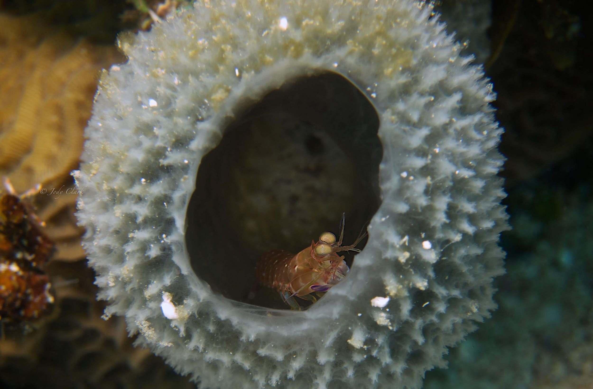 shrimp final (1 of 1).jpg