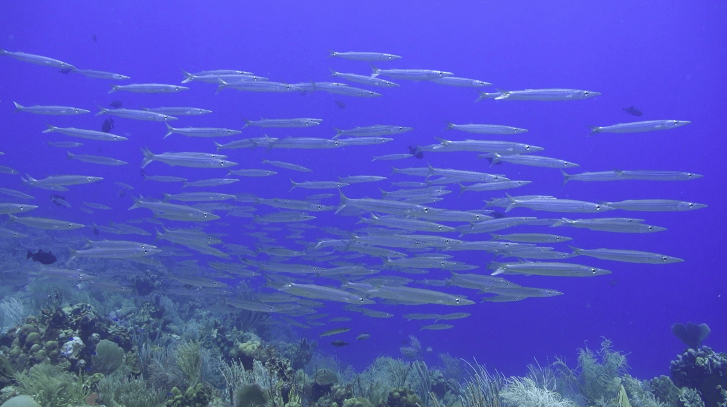 Roatan Divers seamounts Cayos Cochinos scuba diving