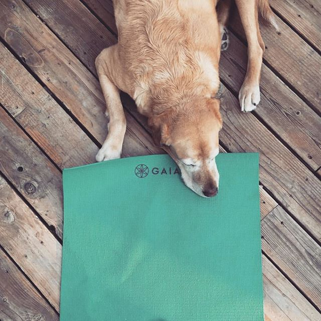 Love the Workout Buddies photos we get during our annual corporate Heathy Habits for the Holidays Challenges! #healthyhabitschallenge #workoutbuddy #gaiam #rumblesum