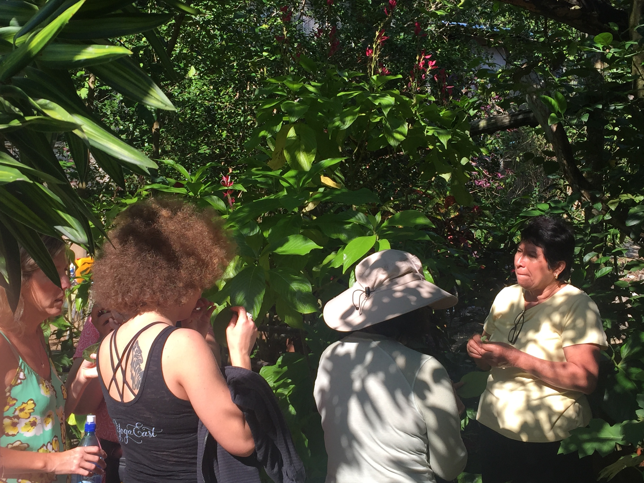 Ahhh the lovely Ms. Chena here below, owner of Clarissa Falls taking us on a Medicinal Walk through her property. What a pure heart, so giving and gifted.