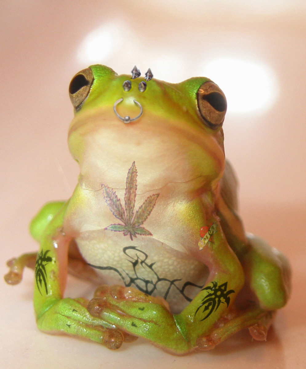 ga_worth-1000-frog-trimmed.jpg