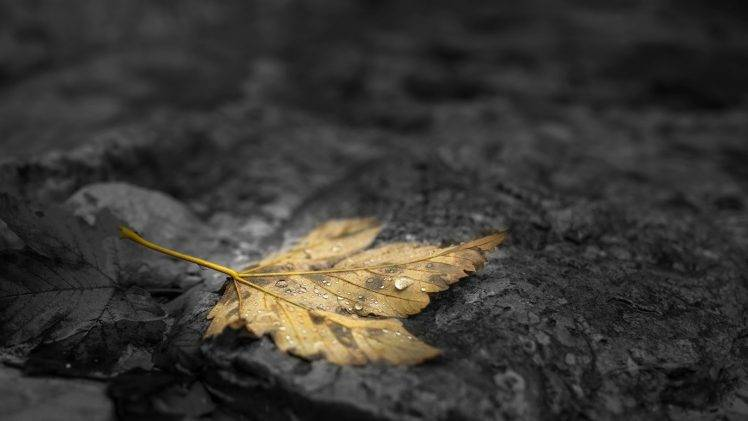 A single yellow leaf, covered in dew, lying on a rock.