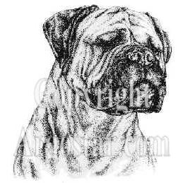 Bullmastiff Portrait