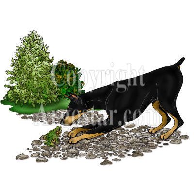 Doberman with Frog Book Illustration