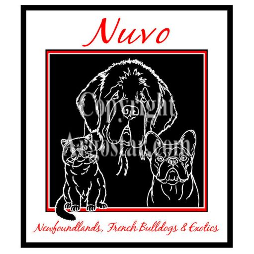 Nuvo Newfoundlands, French Bulldogs, & Exotics Logo