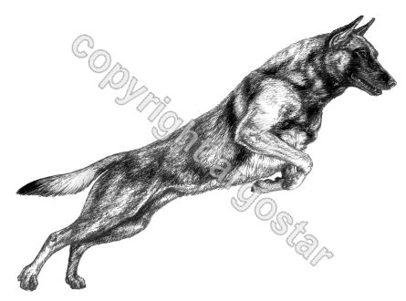 High Mesa Malinois Logo - pen & ink
