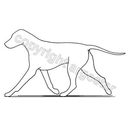 Dog pacing - faulty gait