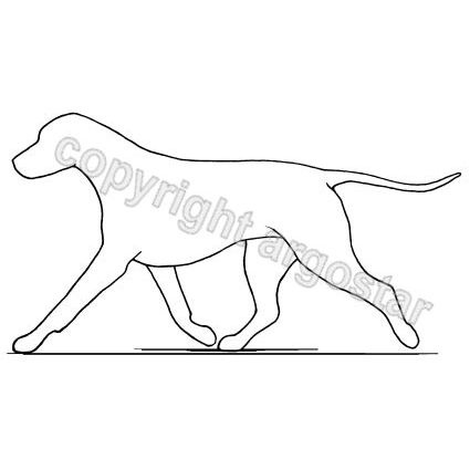 Dog trotting - correct extended movement