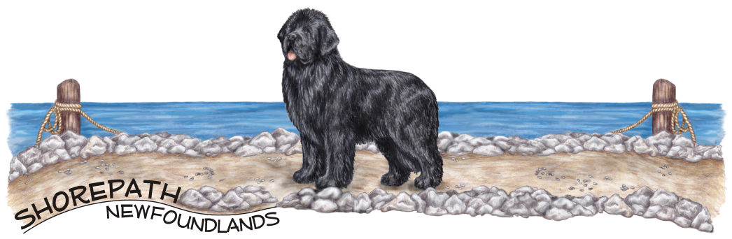 This is the banner version of the logo created for shorepath newfoundlands.  The banner is the logo expanded horizontally for use as a header on the shorepath website.