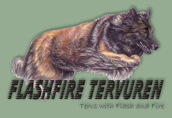 flashfire-tervuren-logo