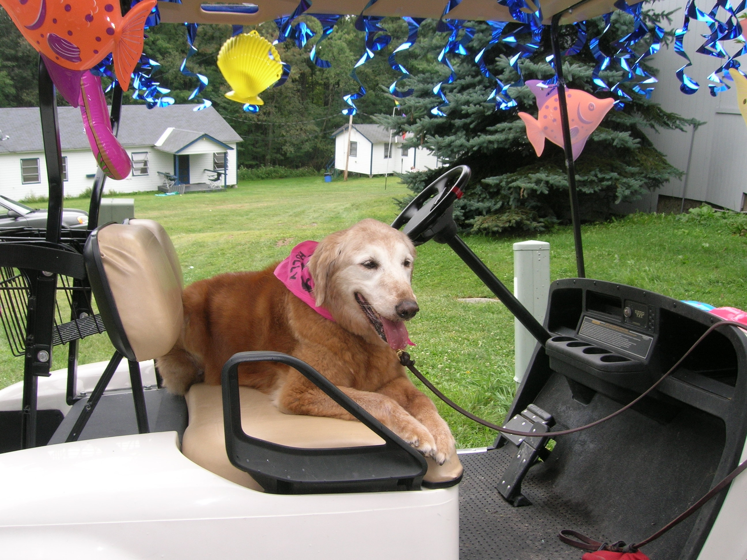 In memory of Holly, Golden Retriever (9 Sep 1993 – 27 Aug 2009)