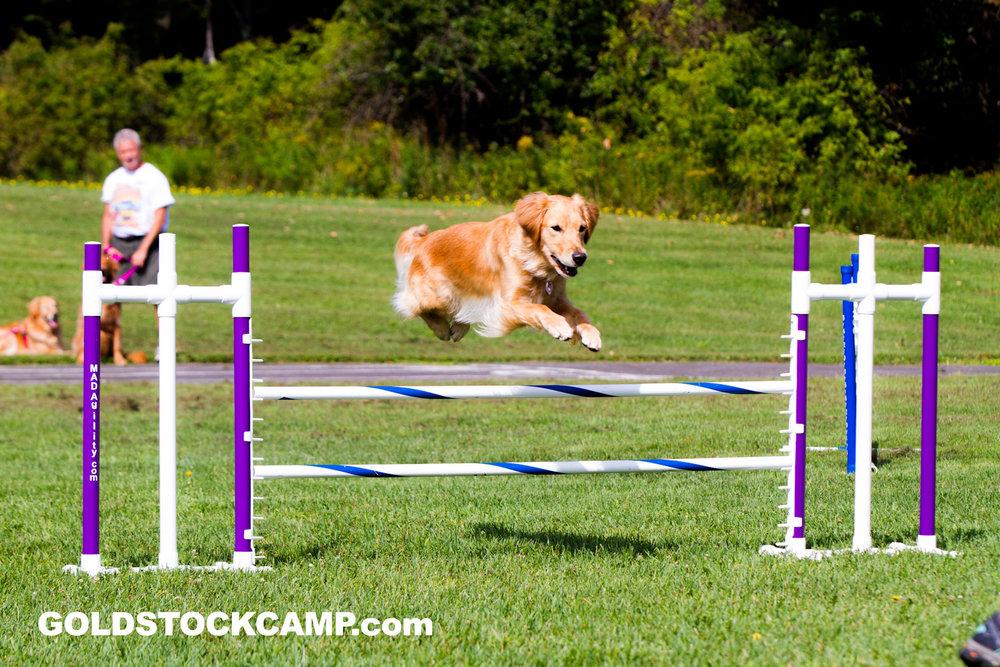 Disney agility jump.jpg