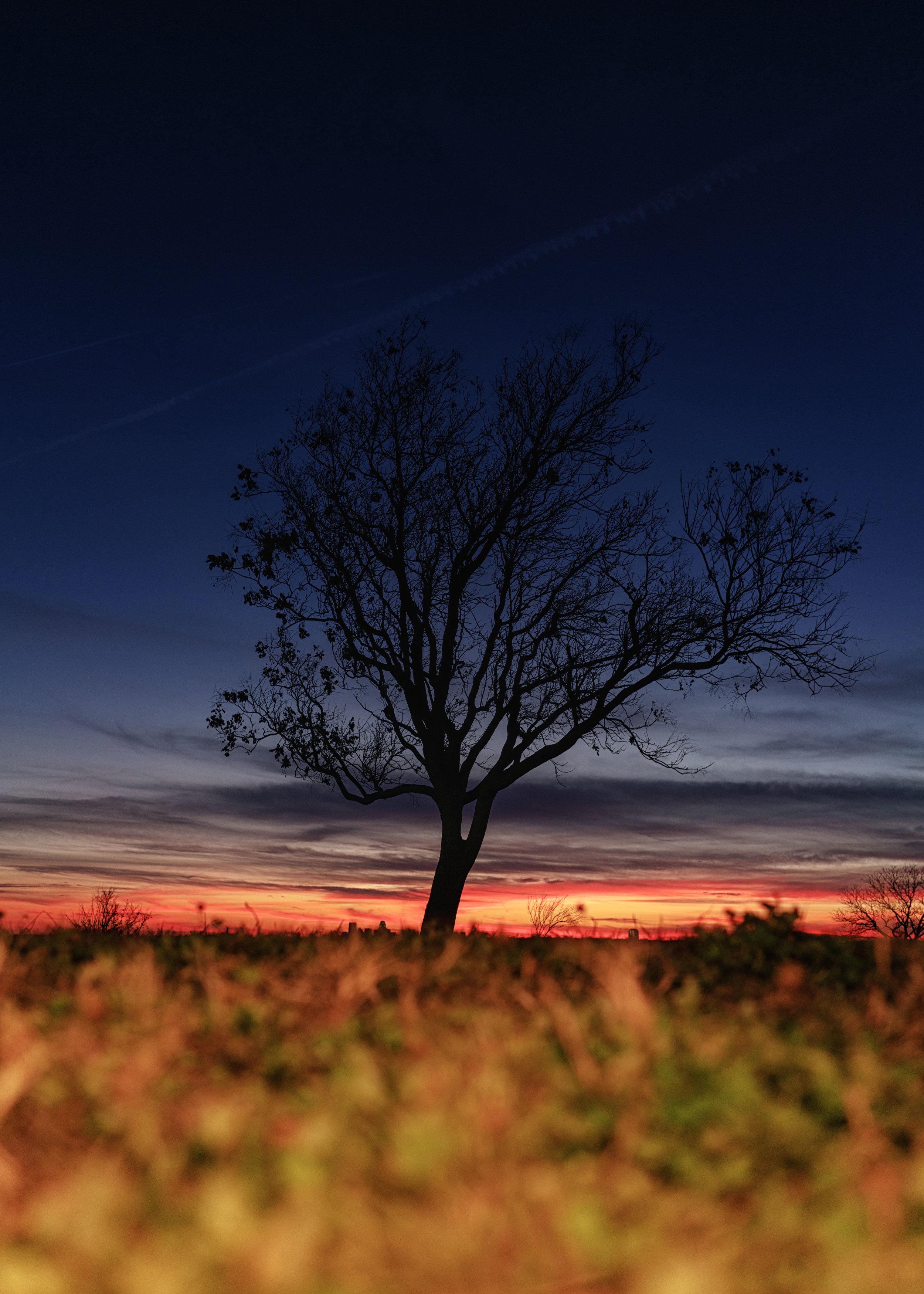 tree-1-2.jpg