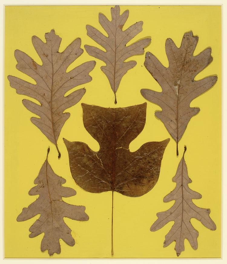Josef Albers, Leaf Study  IX    (via ICA Boston)