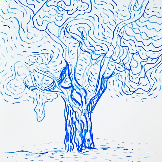 Got one quick drawing in at Mt. Auburn – the old trees make for great subjects.
