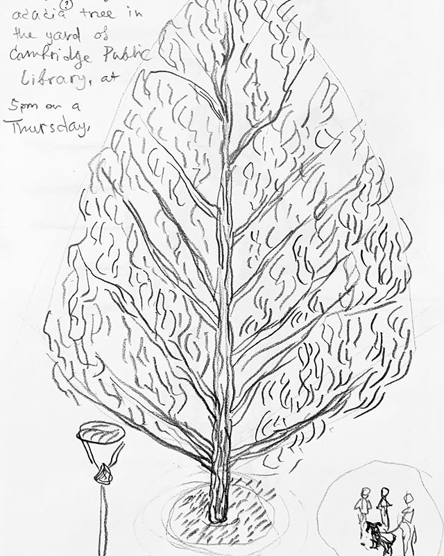 Drew a tree while browsing art books in the lovely second floor space at Cambridge. Always opens my thinking and gives me a brighter outlook, just because of how the space is set up. Good in summer, but even more necessary as a secret weapon for the darker winter days :) #drawingtrees #designartpractice