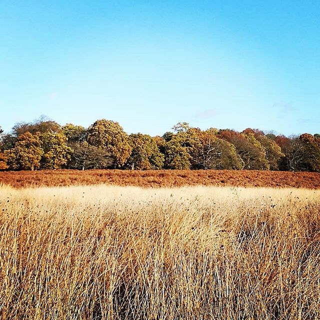 Wonderful autumnal colours in Richmond Park. Feeling very inspired for my current project 🍁🌞 #landscapephotography #nature #grass #clouds #art #interiordesignerlife