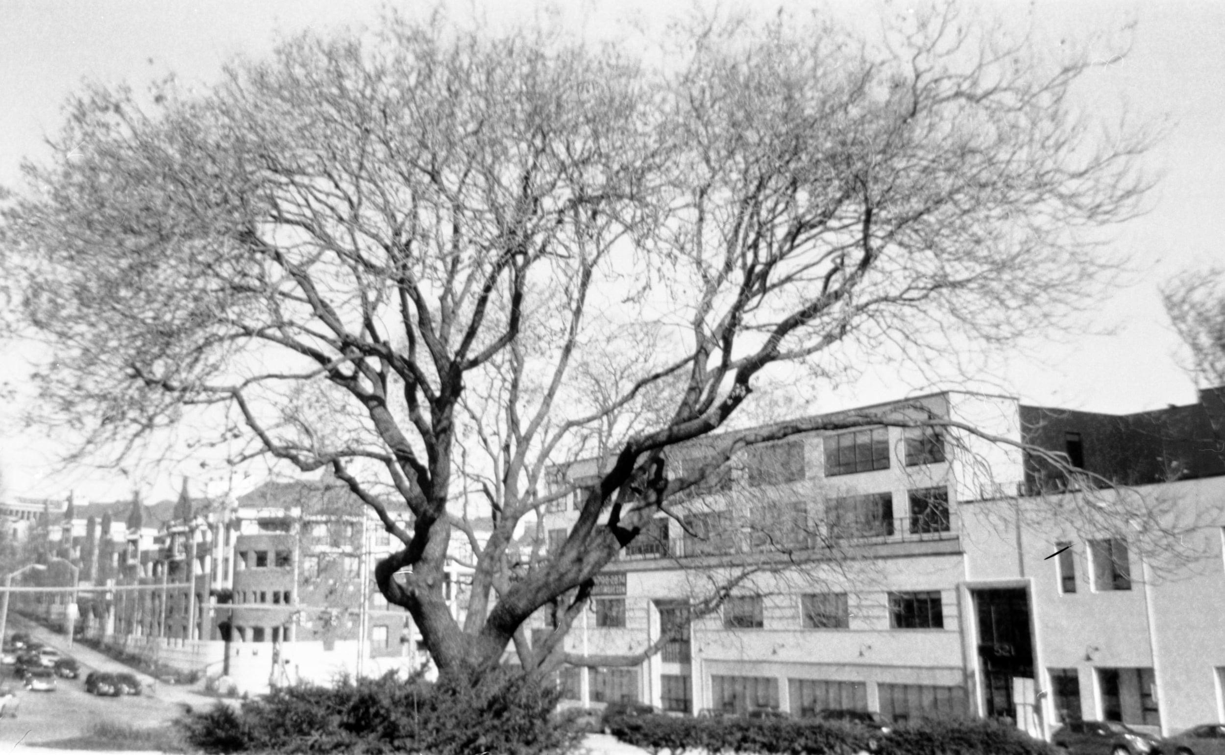 st_paul_tree.jpg
