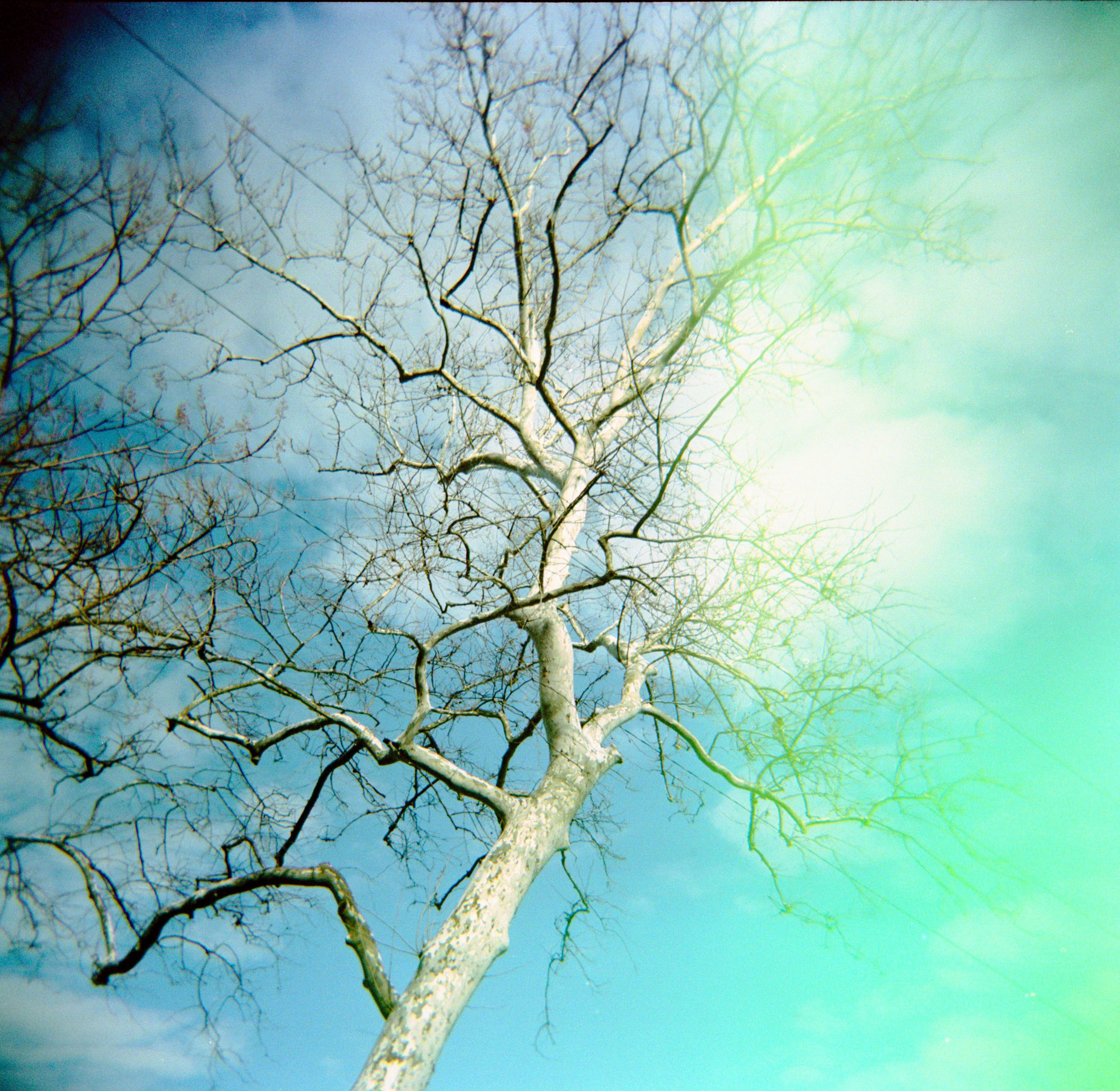 tree_at_conowingo.jpg