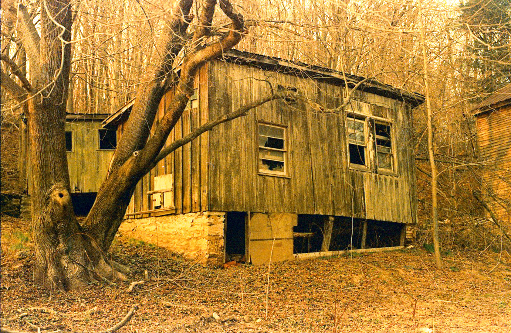 old_shed_trenton.jpg