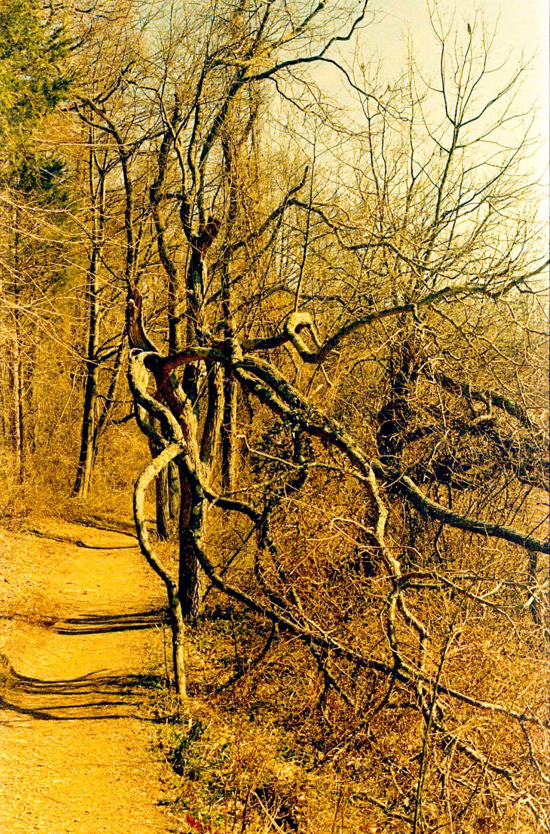 tree_tentacles.jpg
