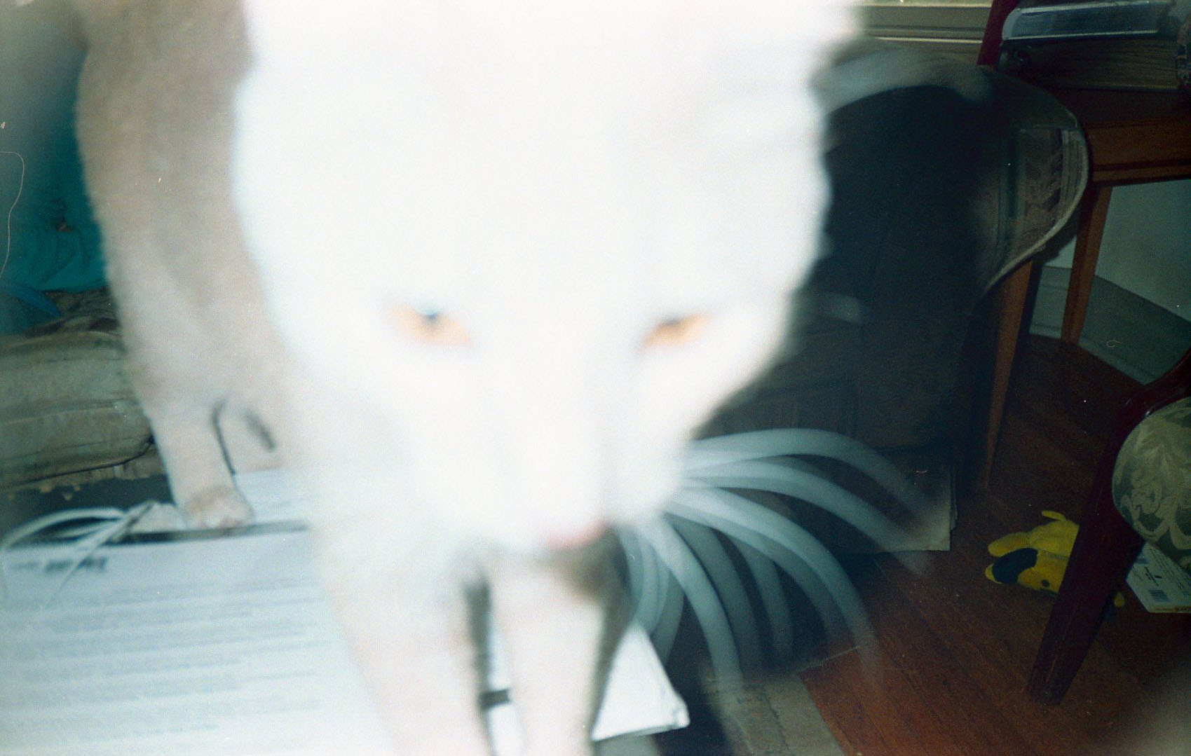 blurry_cat.jpg
