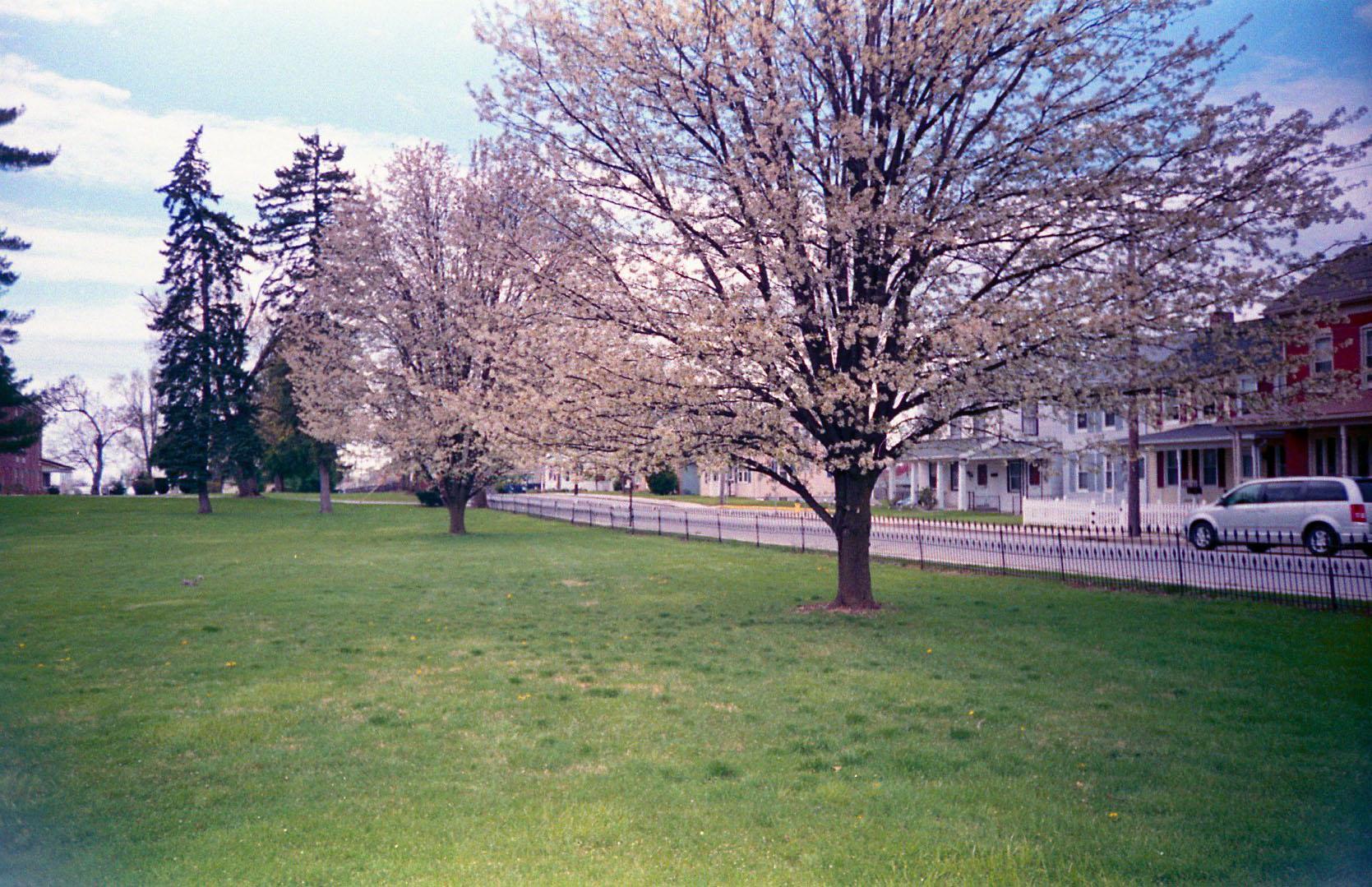 flowering_trees.jpg