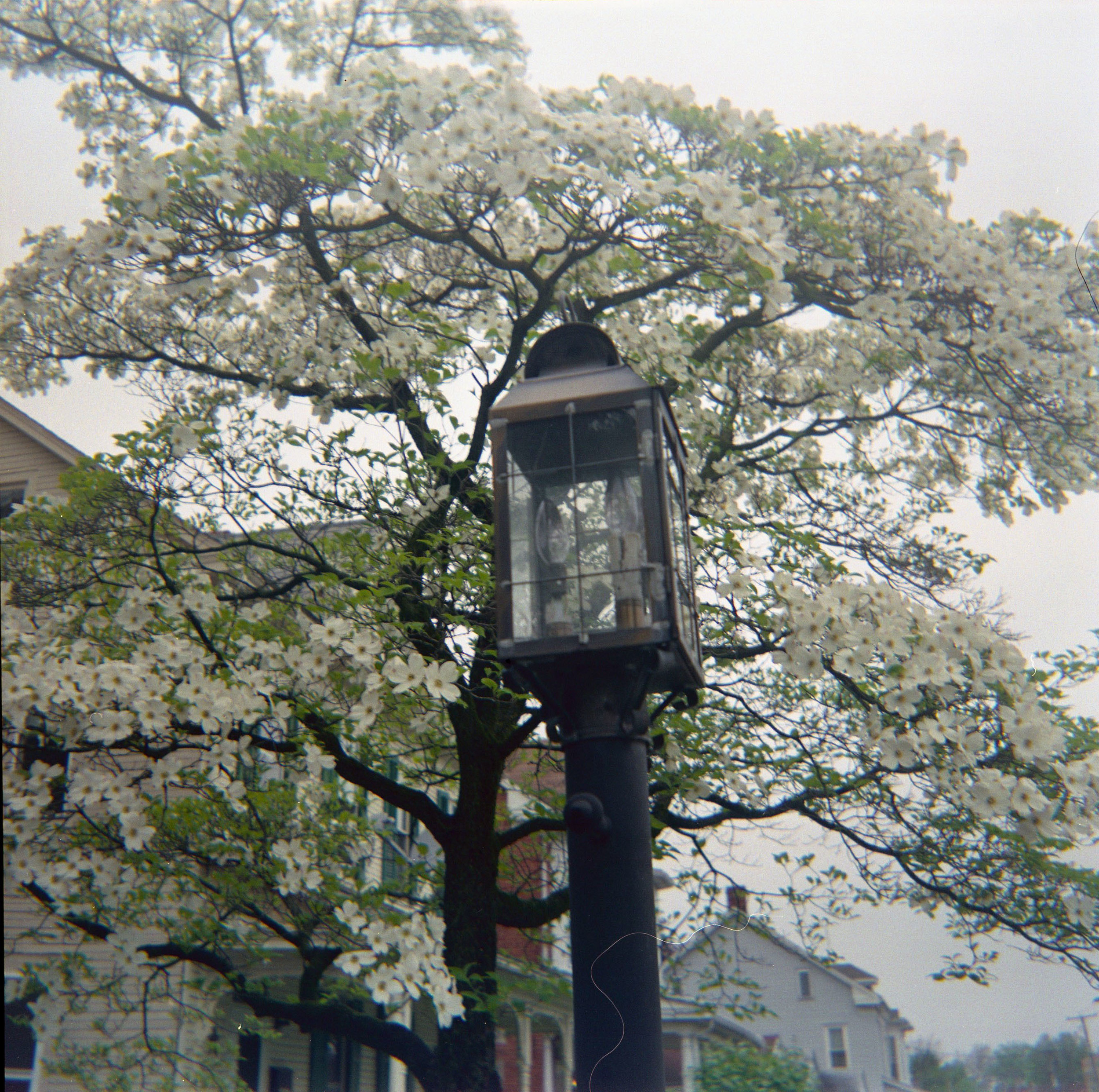 lightpost.jpg