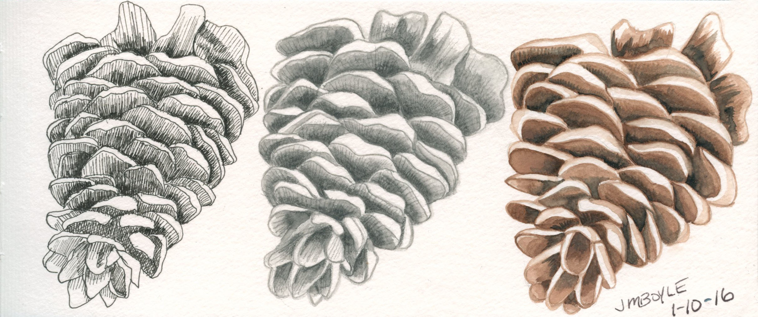 pinecone_3versions.jpg