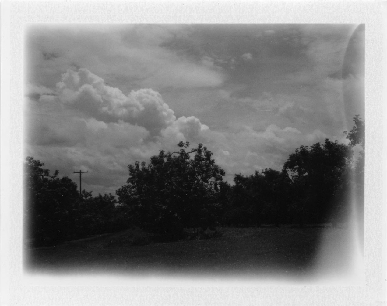 orchard_clouds.jpg
