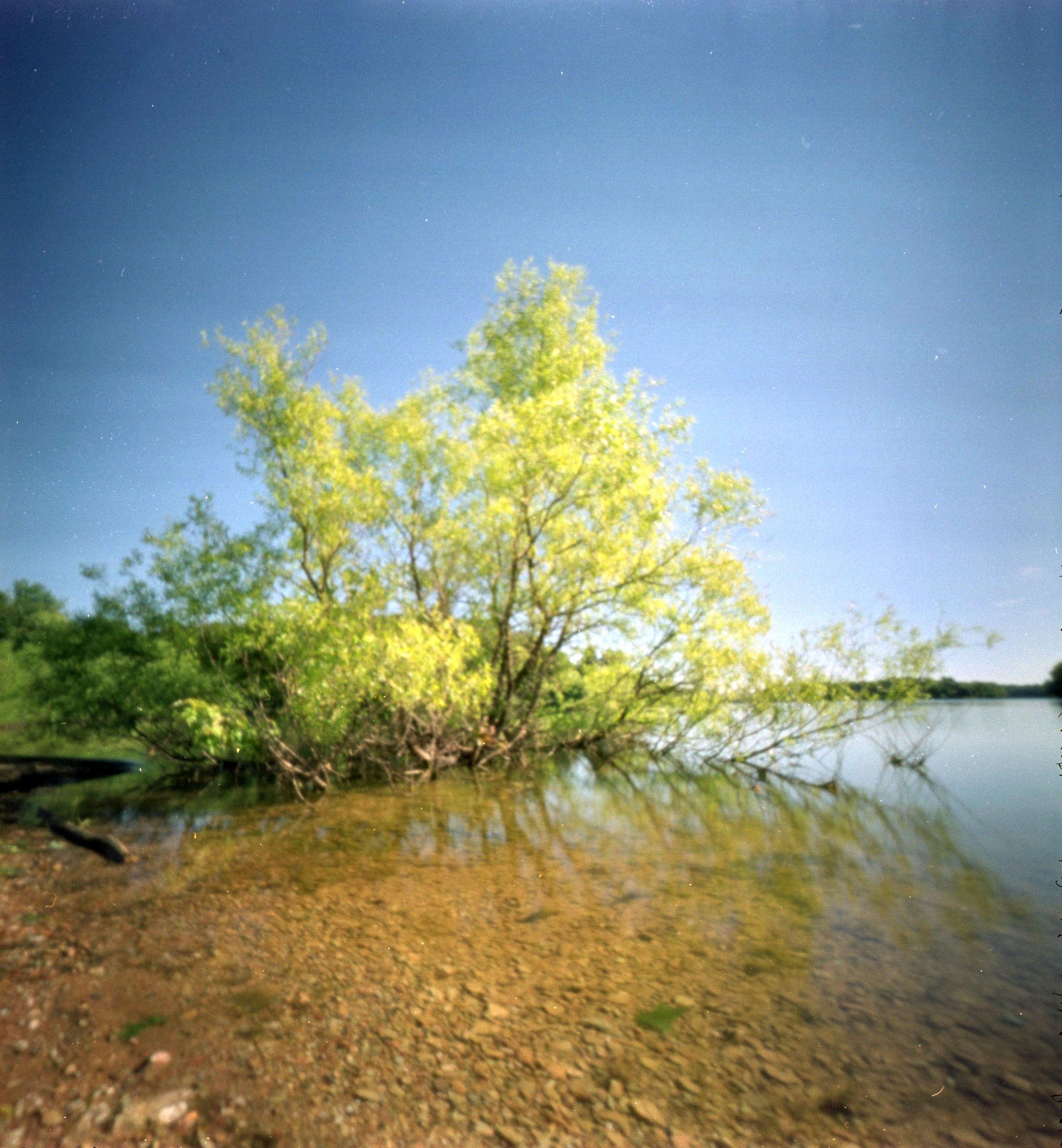 tree_in_water.jpg