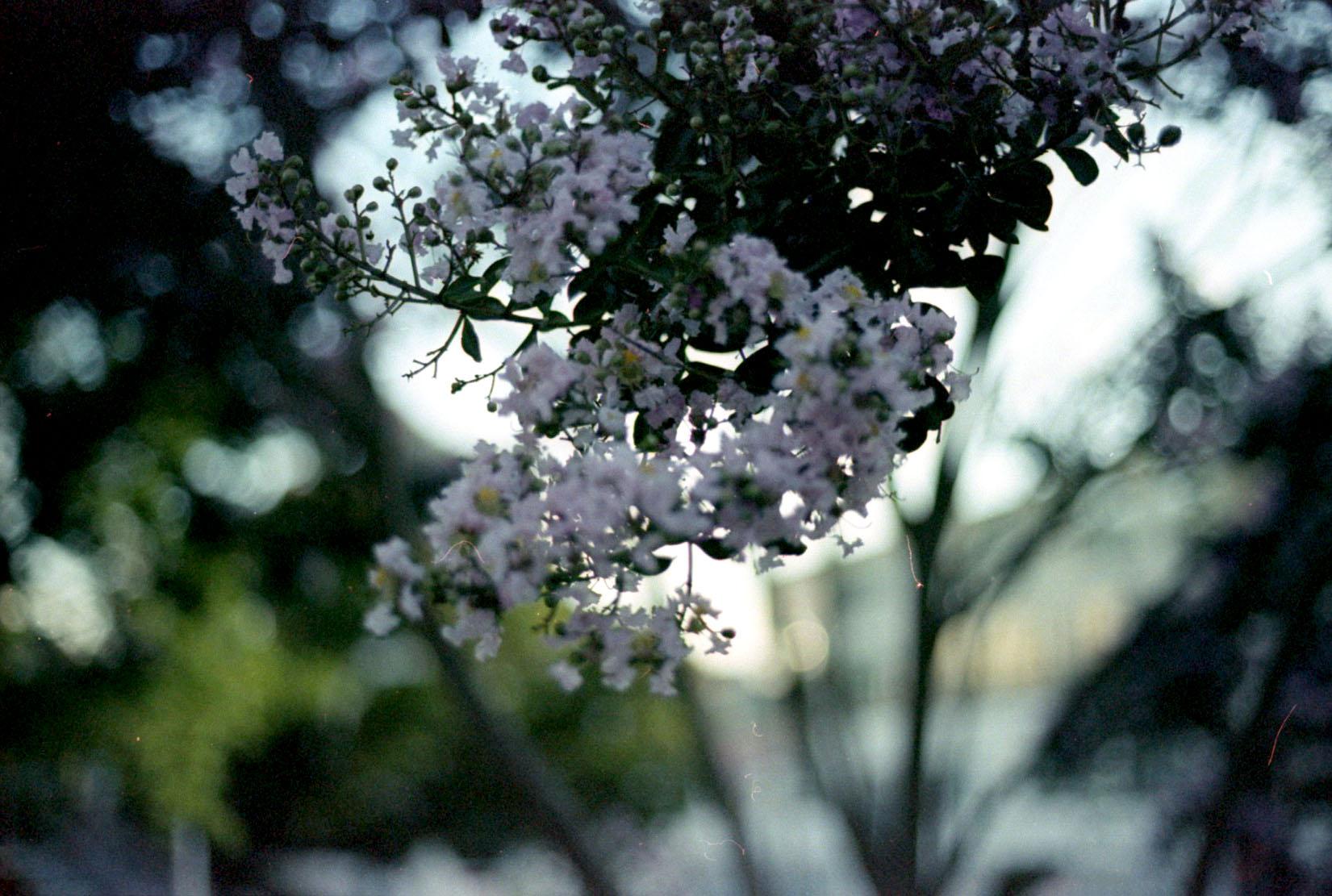 bokeh_blooms_29072102846_o.jpg
