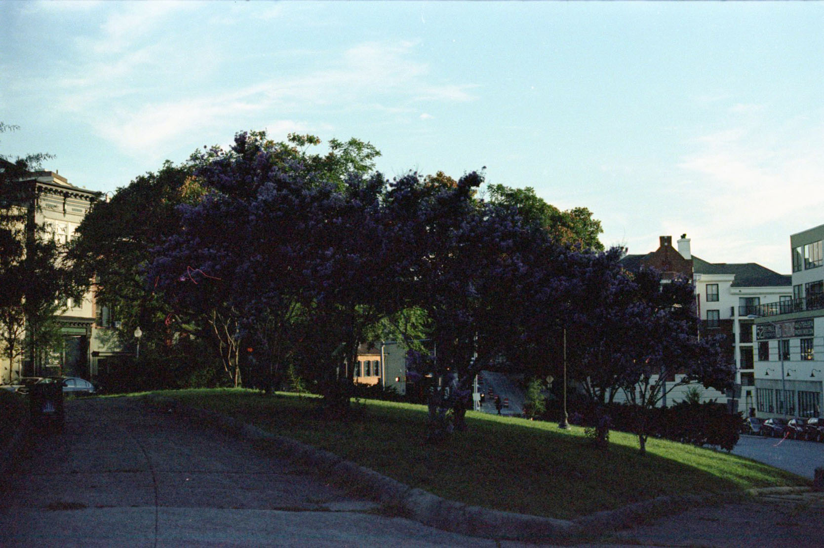 trees_at_stpaul_28486260173_o.jpg