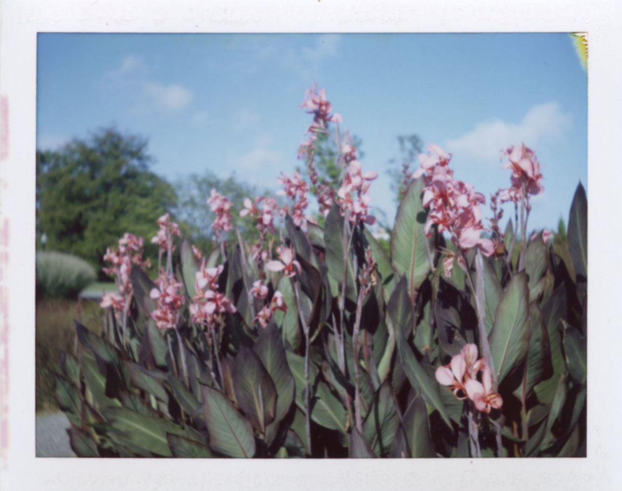 cylburn_arboretum_garden.jpg
