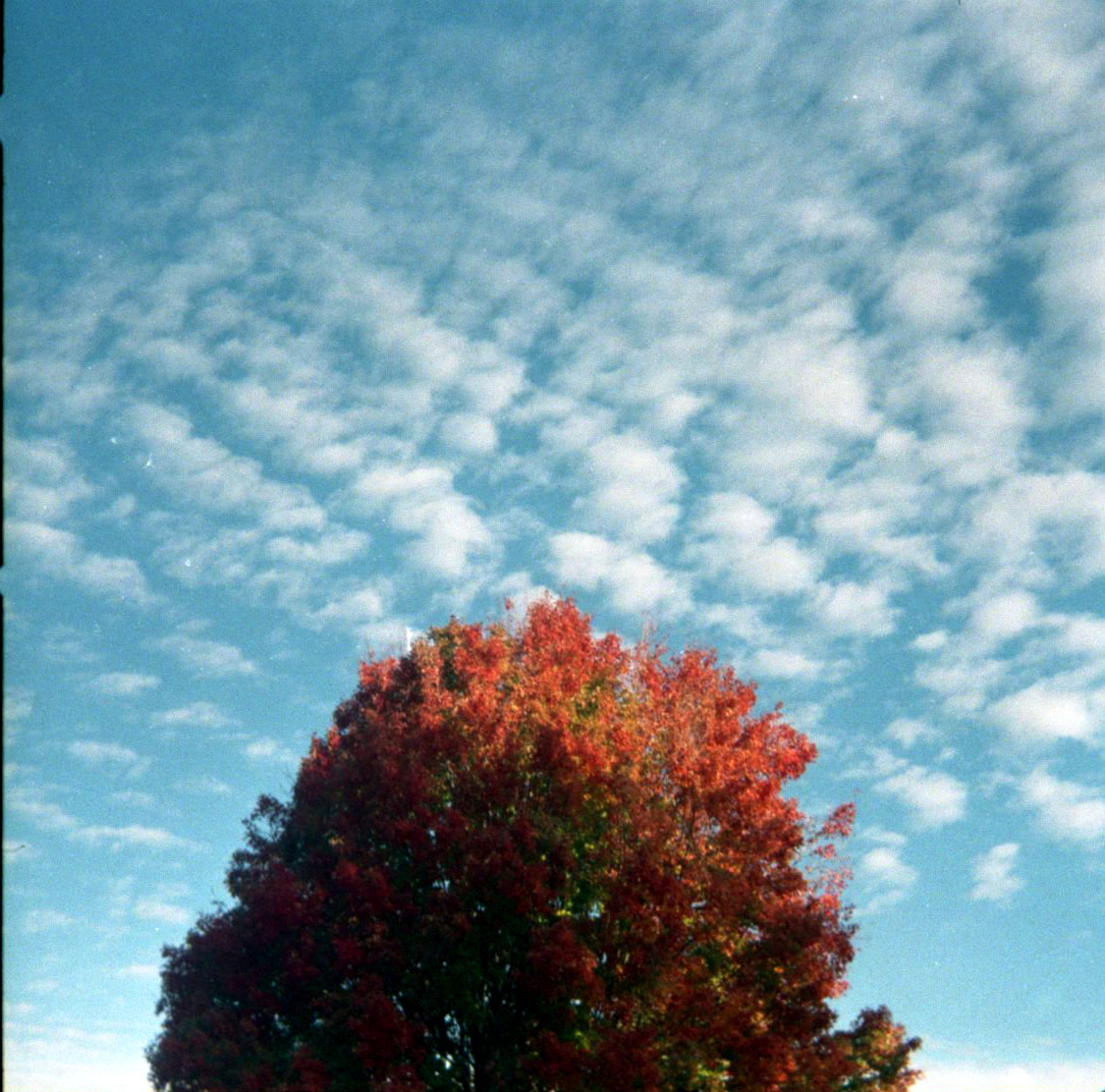 red_tree_and_clouds.jpg