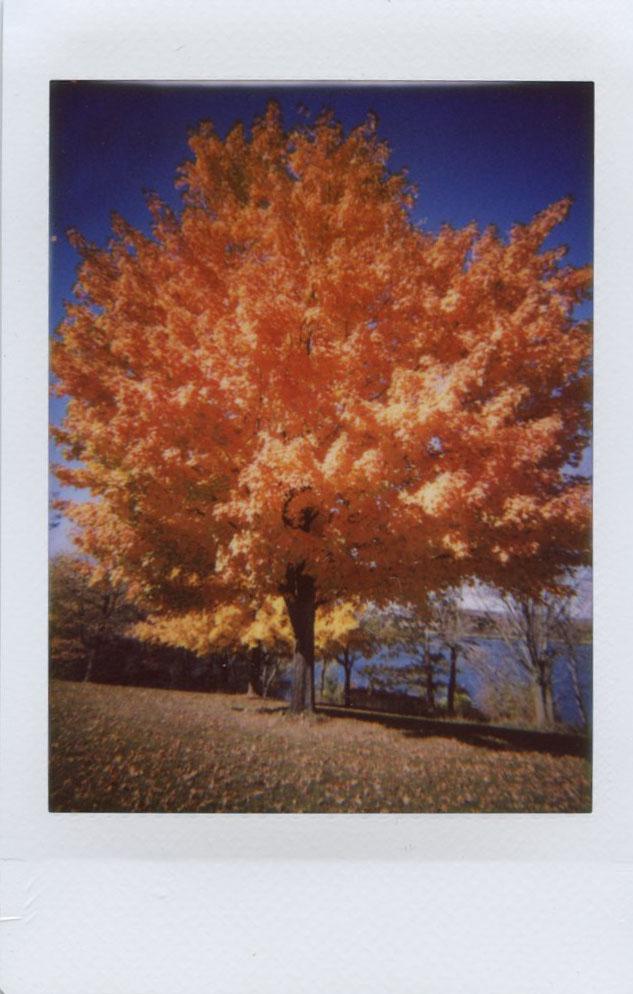 orange_tree.jpg