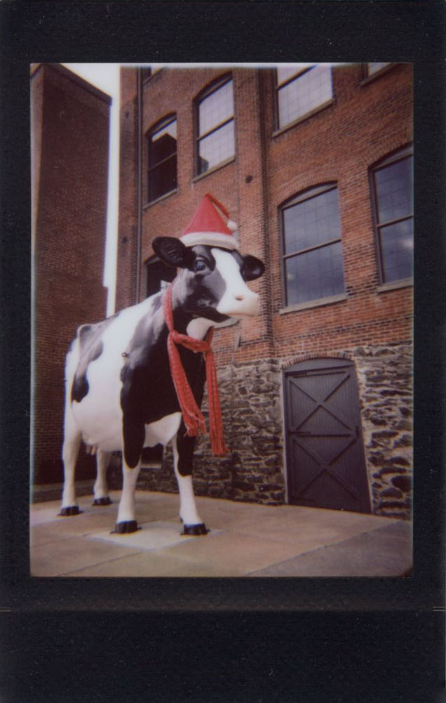 santa_cow.jpg