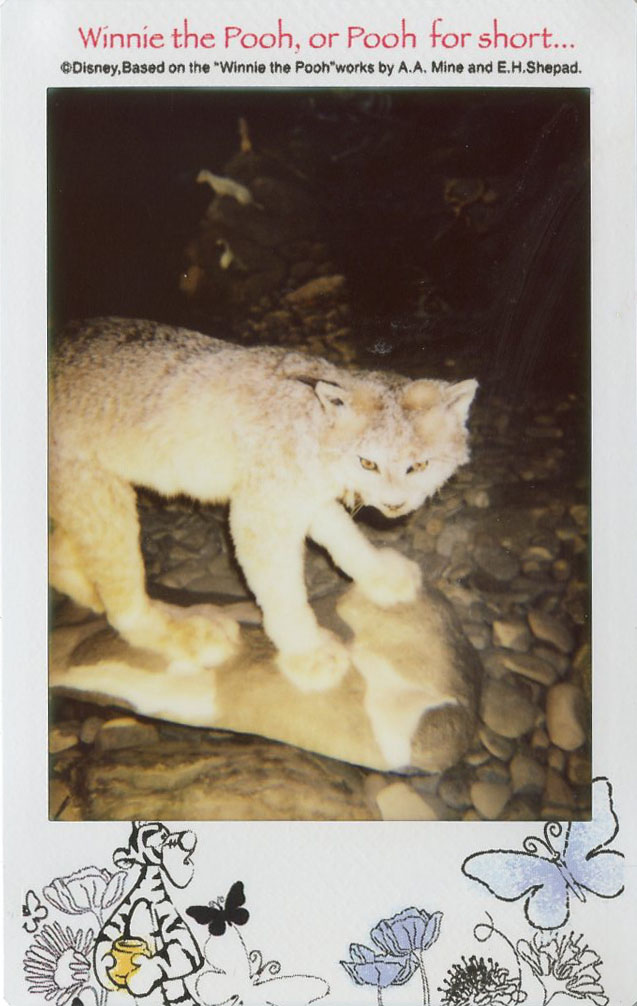 wild_cat.jpg