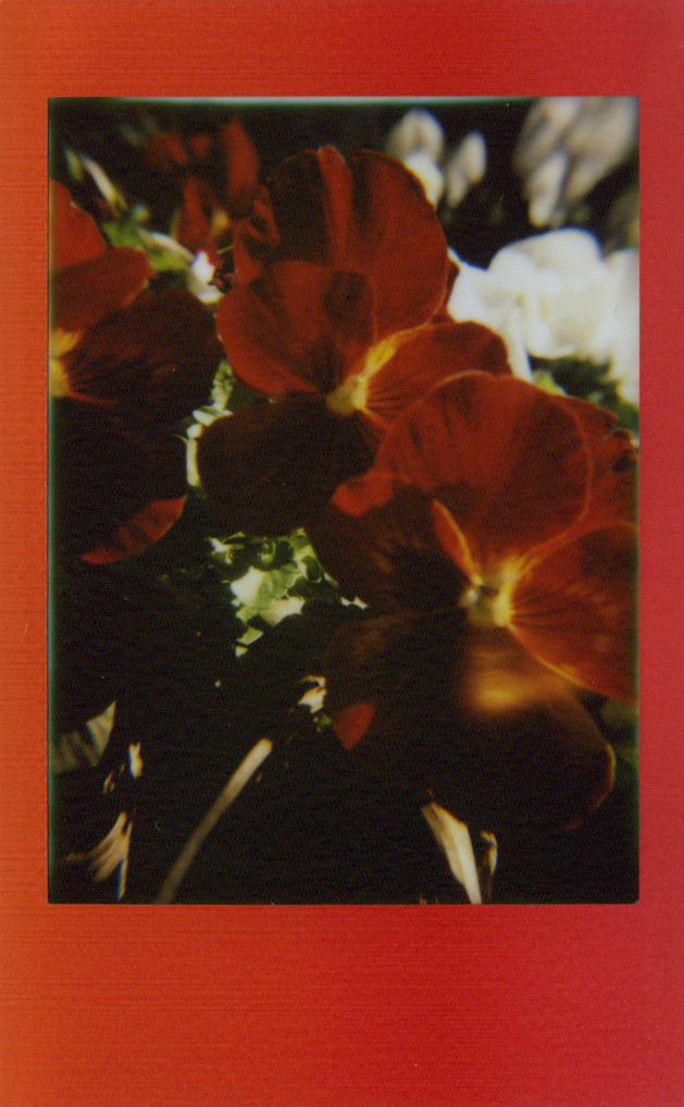 red_orange_flowers.jpg