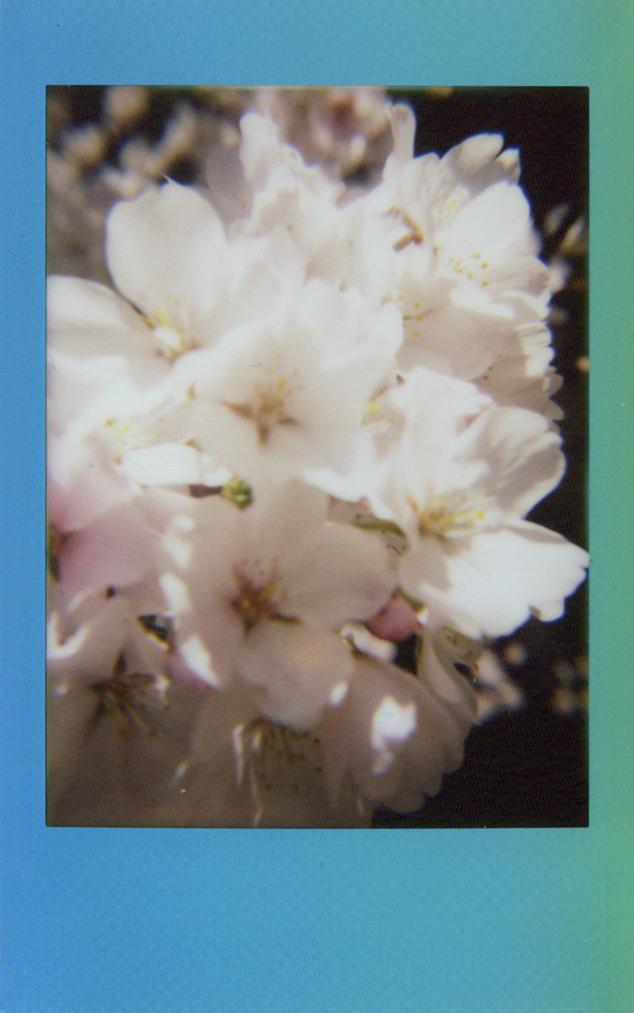 white_blooms.jpg