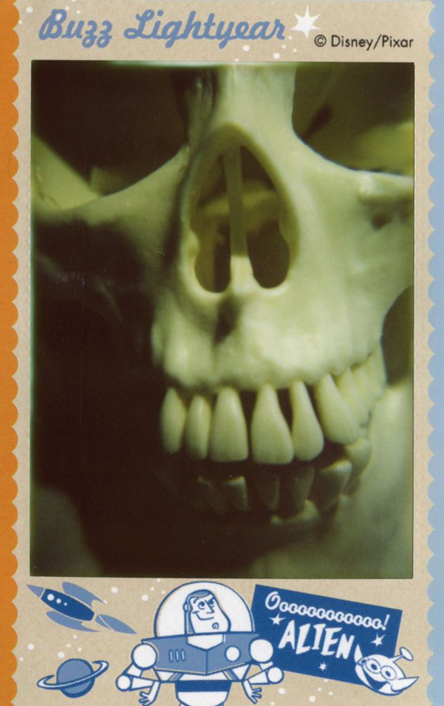 skull_front.jpg