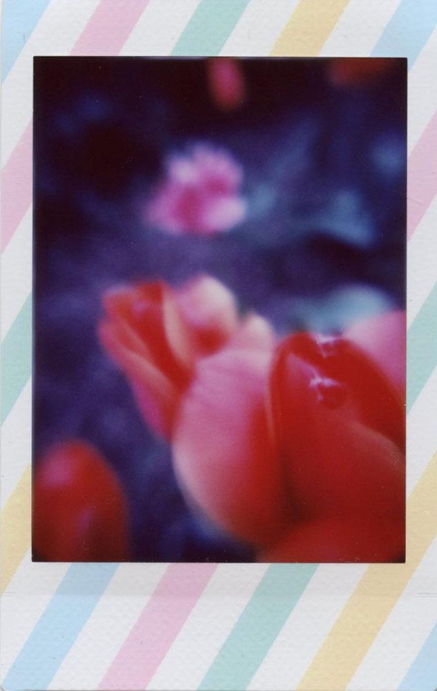 impressionist_tulip.jpg