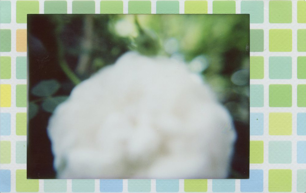 white_rose_blurry.jpg