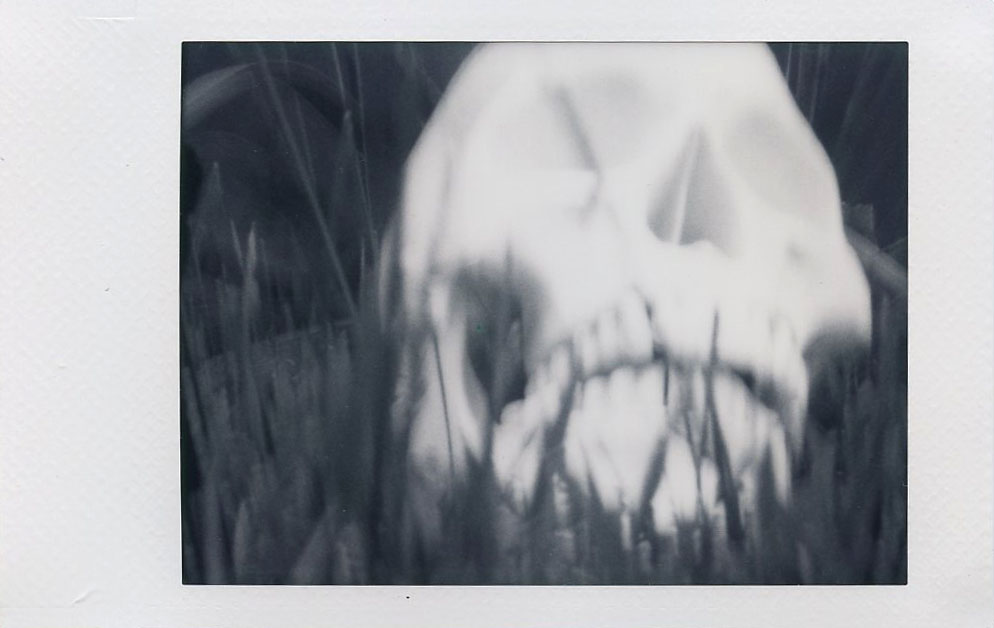 skull_in_the_grass.jpg