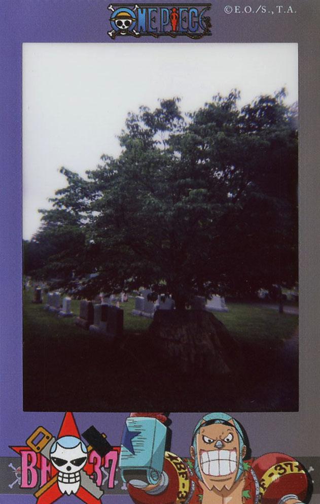 cemetery_view.jpg