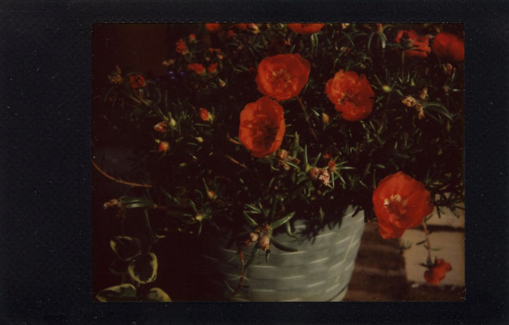 potted_flowers.jpg