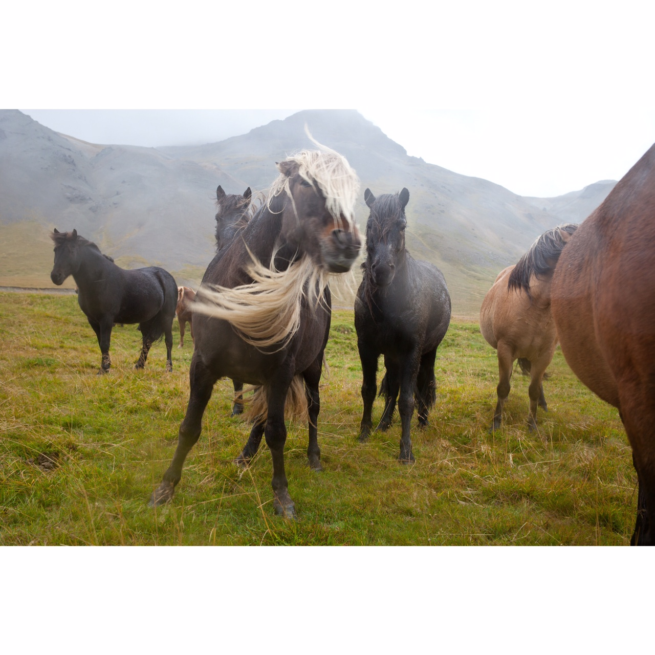 Katrina Jane Perry_Iceland_horse16_3.JPG